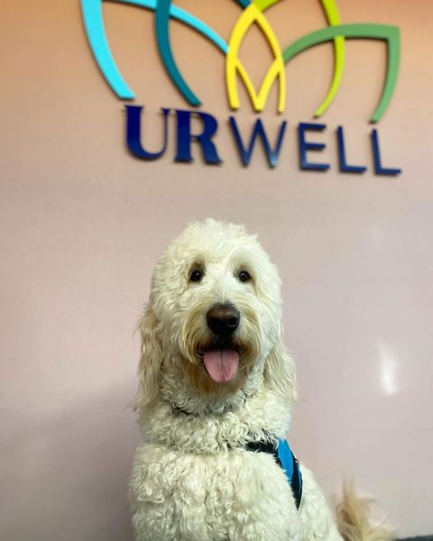 #URichmond Well-Being Center facility dog and very good boy, @emmettofurwellbeing, spent his first day on the job working the welcome desk. 14/10 will visit again. (Bonus pic in our story)