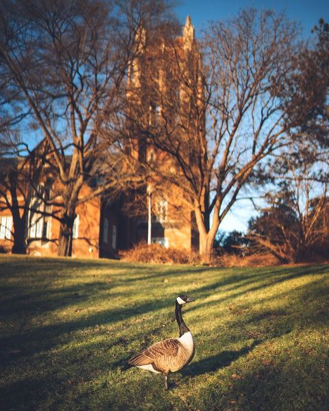 Sorry Goose, but it's time to buzz the tower. #TowerTuesday