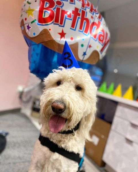 Kicking off our week by wishing @emmettofurwellbeing a very happy third birthday. 🎉🎉 Drop him a message in the comments!