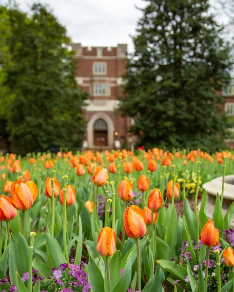 #TowerTuesday? More like #TulipTuesday. 🌷🕷