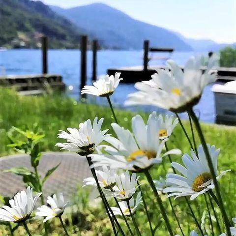 """""""Die Blumen des Frühlings sind die Träume des Winters"""". Zit.  Wir sehnen uns nach dem baldigen Aufblühen unseres Parks und dem Lächeln der Gäste, die ihn geniessen. . #frühlingsgefühle #frühling2020 #frühlingamsee #ig_switzerland #ig_cantonticino #tessin #svizzeraitaliana #italienischeschweiz #ticinomoments #schweizwonderland #luganoregion #malcantone #blumenliebe #rückblick2020"""