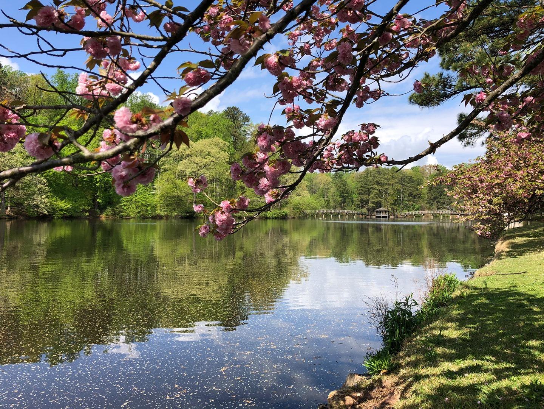 Same blooms as yesterday — now with more Westhampton Lake. (And more pollen.) 📸: @ariskaramustafic, '24
